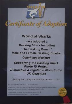 Basking Shark Adoption Certificate