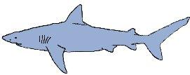 Ground Sharks