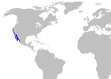 Horn Shark Distribution Map