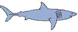 Mackerel Sharks