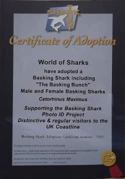Basking Shark Adoption Certificate