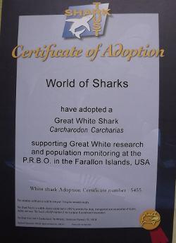 White Shark Adoption Certificate