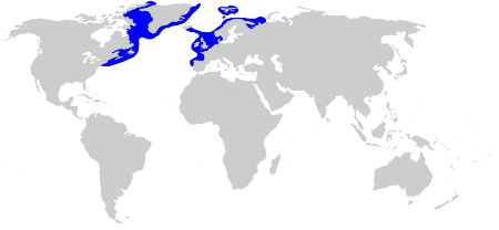 Greenland Shark Distributio
