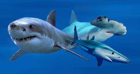 World of Sharks